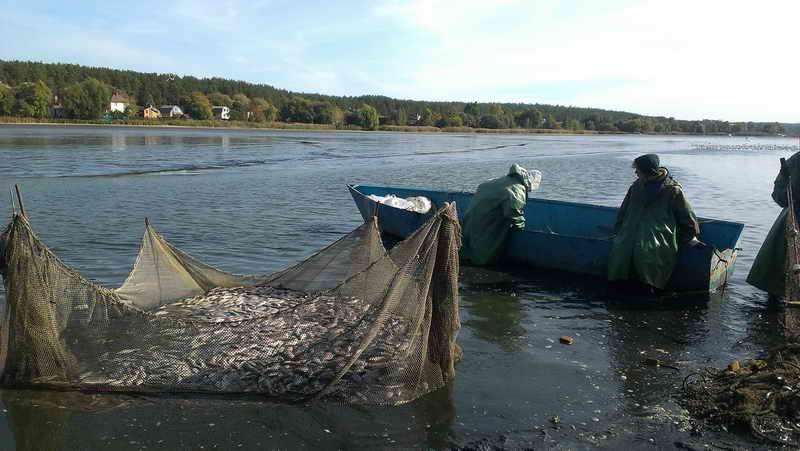 Облов нагульного пруда рыббригадой