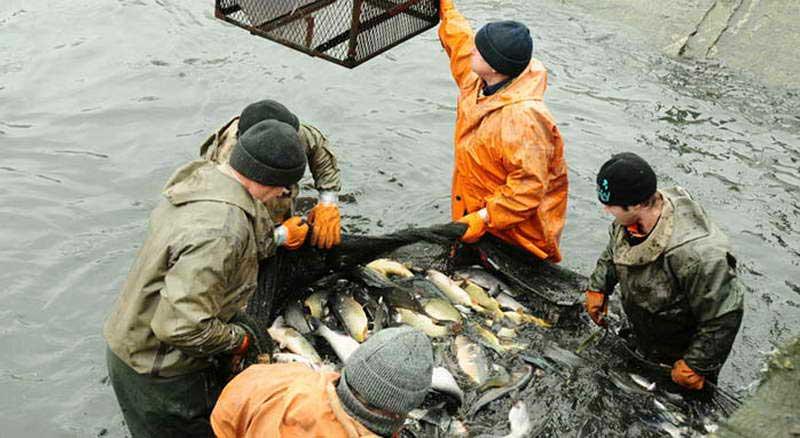Отгрузка рыбной продукции