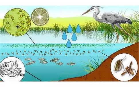 Развитие природной кормовой базы водоема Ривермом для аквакультуры